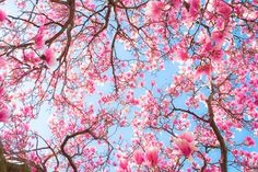 pink tumblr photography - Google Search
