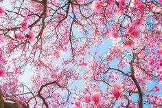 flowers tumblr - Buscar con Google