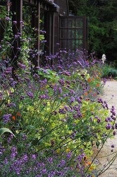 Hidcote Manor Gardens   by Mark Wordy