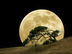 Lovely Moon Photo