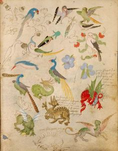 The Illuminated Sketchbook of Stephan Schriber, 1495. Birds and grotesques.