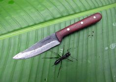 Condor Sub Tavian Knife. The SubTavian is the smaller brother to the Tavian Knife. The Sub Tavian features hardwood Handles and a Hand Crafted Welted Leather Sheath.  Designed by Joe Flowers.