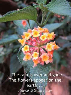 ...The rain is over and gone. The flowers appear on the earth;... Song of Solomon 2:11-12