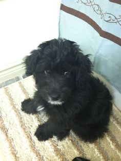 The cutest puppy ever! (Koda)