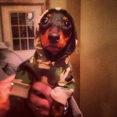 I'm hunting Wabbits