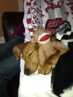 (Cooper the #doxie and his sock monkey from FB