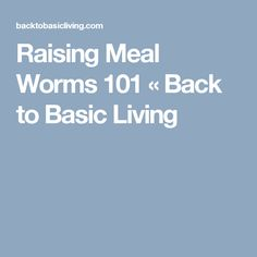 Raising Meal Worms 101 « Back to Basic Living