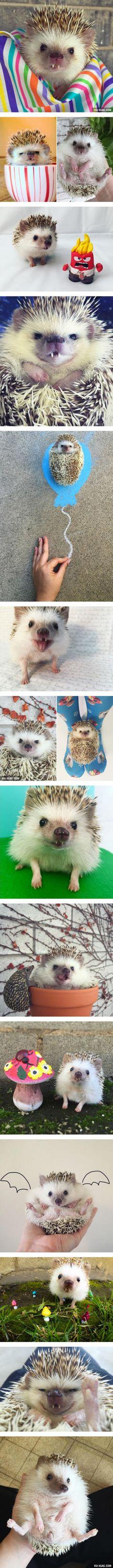 Meet Huff: The Vampire Hedgehog