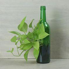 #BottlePlant #Greenbottle #Antique #Cute #Decor #Ideas #Art #Diy #Decoration #Beautiful #Stylish #Unique #Design #Green #Plants #Garden Bottle Garden, House Plants, Decoration, Art Diy, Beautiful, Design, Stylish, Home Decor, Unique