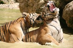Tiger Temple Kanchanburi, Thailand - photos by suninmyeyes @pinterest