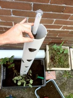 Grow sweet strawberry in a vertical PVC tube is great solution for small garden or yard. Vertical planter will save you a lot of space, at the same time keep plants out of reach from garden insect pests. Strawberry Tower, Strawberry Planters, Strawberry Garden, Vertical Planter, Vertical Gardens, Small Gardens, Container Gardening, Gardening Tips, Organic Gardening