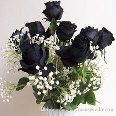rare black rose flor frete grátis 50 pedaço seeds rosas pretas - perder dinheiro ganhou a