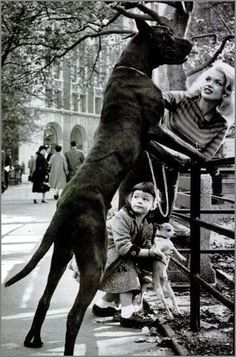 Jayne Mansfield, Mariska Hargitay, her Great Dane & Chi. I love how Mariska is trying to stand that teeny pup up on the fence like the Dane.