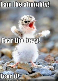 Fear the fuzzy!