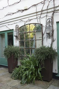 potted ferns in front of large vintage mirror in neisha crosland's london garden