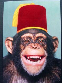 http://www.awmok.com/wp-content/uploads/2010/07/fez1.jpg This monkey is wearing a fez.