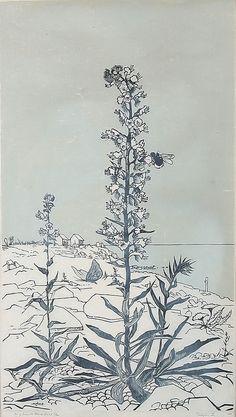 ✨ TORBJÖRN ZETTERHOLM - Blåeld Öland, 1954, träsnitt, signerad, numrerad 5/20, 61 x 35 cm ::: Blueweed on Öland Isle, Woodcut