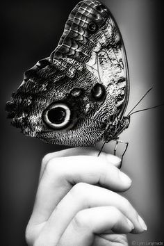 """Trust"" - Black and White Nature Photography by Lynn Langmade - monochrome photo of a large black, white and silver butterfly on a child's hand."