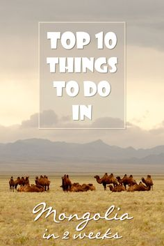 Mongolia is great for an adventurous trip. If you're looking for a great 2 weeks holiday destination, here is my top 10 of things to do in Mongolia.