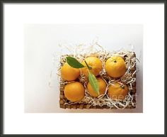 """Oranges"" :: photograph by Cindy Garber Iverson"
