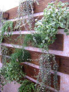 JARDIM DE INVERNO Small Courtyard Gardens, Terrace Garden, Farm Gardens, Small Gardens, Garden Planters, Outdoor Gardens, Small Garden Under Stairs, Small Patio, Garden Pictures