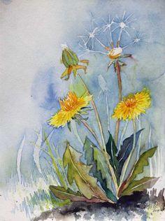 Blumen und Blüten bringen Farbe in den Winter   ganz gewöhnlicher Löwenzahn (c) Aquarell von Frank Koebsch