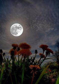 #moons