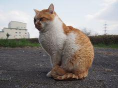 イケメン猫さん(眠いだけ)。僕の友達。