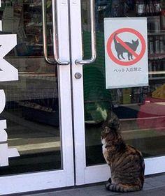 'Katie; bar the door!'