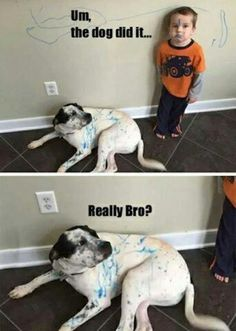 50 Hilarious (And Relatable) Dog Memes For National Dog Day - Funny Husky Meme - Funny Husky Quote - Oh I dont think so. The post 50 Hilarious (And Relatable) Dog Memes For National Dog Day appeared first on Gag Dad. Funny Dog Memes, Funny Animal Memes, Cute Funny Animals, Funny Animal Pictures, Memes Humor, Funny Cute, Funny Shit, Hilarious Pictures, Mom Funny