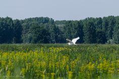 Danube Delta, Visit Romania, Storks, Mountains, Nature, Travel, Animals, Naturaleza, Voyage