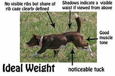 how to identify the ideal weight for most dogs