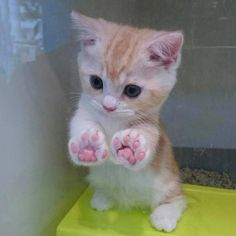 Forget the face. Just look at those widdle paw beans. via: