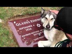 Cachorro se emociona ao visitar o túmulo da dona