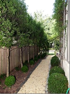 Perfectly manicured and landscaped side yard via Cote de Texas . Excellent idea for those narrow side yards - no mowing! Side Yard Landscaping, Hydrangea Landscaping, Privacy Landscaping, Landscaping Ideas, Privacy Trees, Yard Privacy, Small Gardens, Outdoor Gardens, Seiten Yards