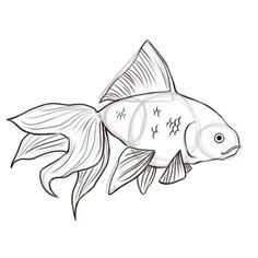 how to draw goldfish: 9 steps (with pictures)