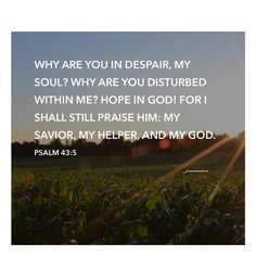 Psalm 43:5  Why are you in despair my soul? Why are you disturbed within me? Hope in God! For I shall still praise him: my Savior my helper and my God. #OurDailyBread #BibleVerseOfTheDay #TimeToReflect #100of366 #04092016 by jemvsantos http://ift.tt/1KAavV3