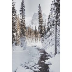 winter white ❤ liked on Polyvore featuring backgrounds, pictures and winter