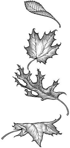 Article is about drawing trees, but includes sample drawings of leaves, some of which curl in a way similar to the way sycamore leaves curl.