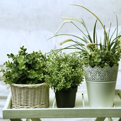 How to Repot Houseplants - Gardening - Mother Earth Living