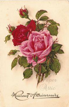 Pink & Red Roses Rosebud Vintage French Chromo Postcard Post Card from Vintage Paper Attic