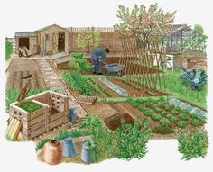 How to Start a Vegetable Garden in Your Yard