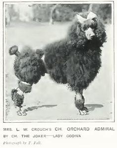 Poodle, 1907, CH Orchard Admiral http://poodlepedigree.com/pedigree.asp?ID=5249