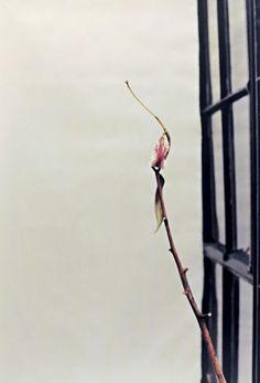 Wolfgang Tillmans, Lily, 1997. Ink-jet print.  Guggenheim Collection Online  http://www.guggenheim.org/new-york/collections/collection-online/artwork/11405