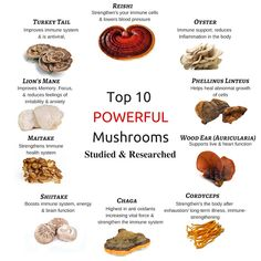 The Superfood Qualities Of Mushrooms And Why You Should Add Them To Your Diet By Barbies Beauty Bits And Naked Nutrient Matcha Benefits, Coconut Health Benefits, Be Natural, Natural Cures, Maitake Mushroom, Tomato Nutrition, Nutrition Tips, Cucumber Nutrition, Nutrition Month