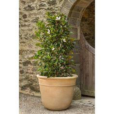 Carema Planter Extra Large | Kinsey Garden Decor