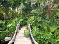 houzz - modern architecture - raymond jungles, inc. - david's garden - miami - florida - exterior view - tropical garden