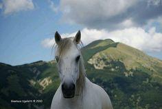 The Ventasso Horse Rare Horse Breeds, Oriental, Rare Horses, Regions Of Italy, Animals, Color, Animales, Animaux, Colour