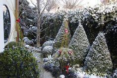 Wizytówka - Ogród nie tylko bukszpanowy - strona 4 - Forum ogrodnicze - Ogrodowisko