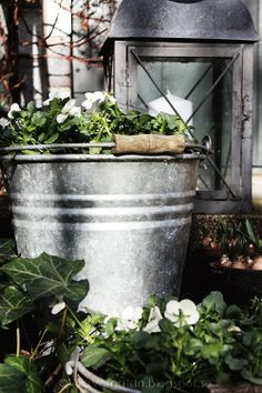 Simple galvanized pieces, white and green plantings